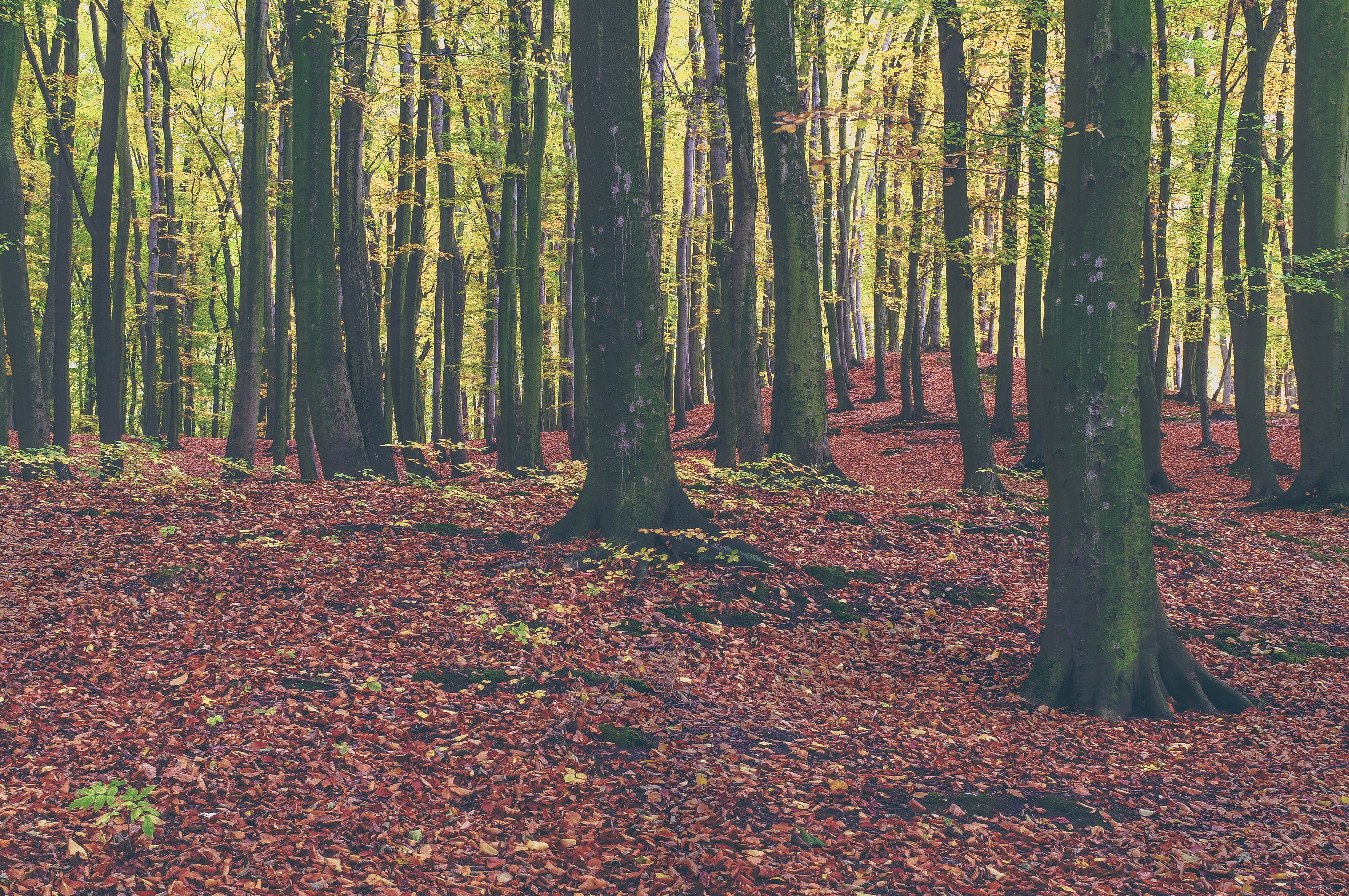 Wald, Wanderweg, Naturerlebnis, Bos, wandelpad, natuurbelevenis, wandelpad, natuurbelevenis, Forest, hiking trail, nature experience