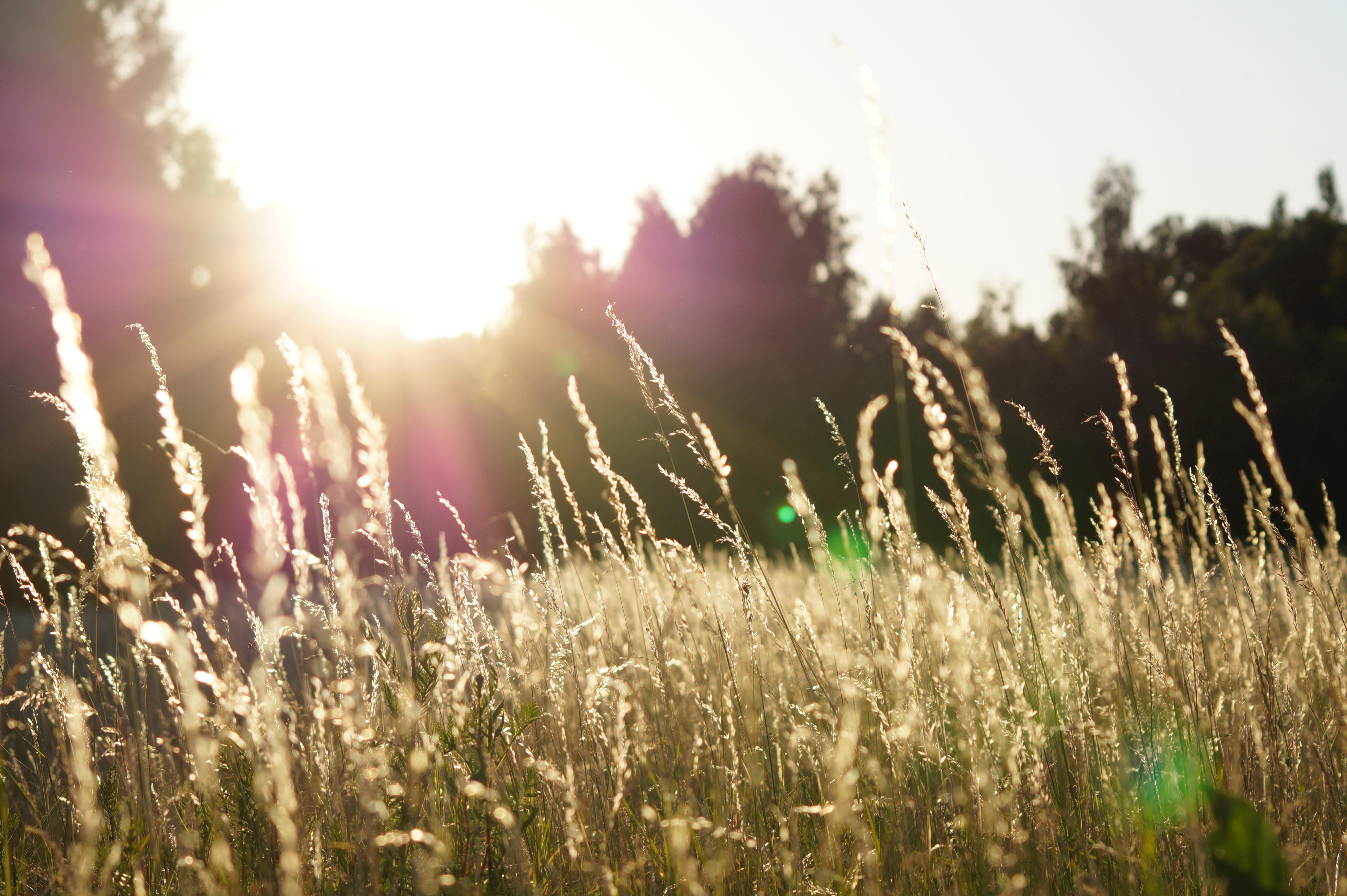 Sonne, Feld, Natur, Sun, Field, Nature, Zon, Veld, Veld, Natuur